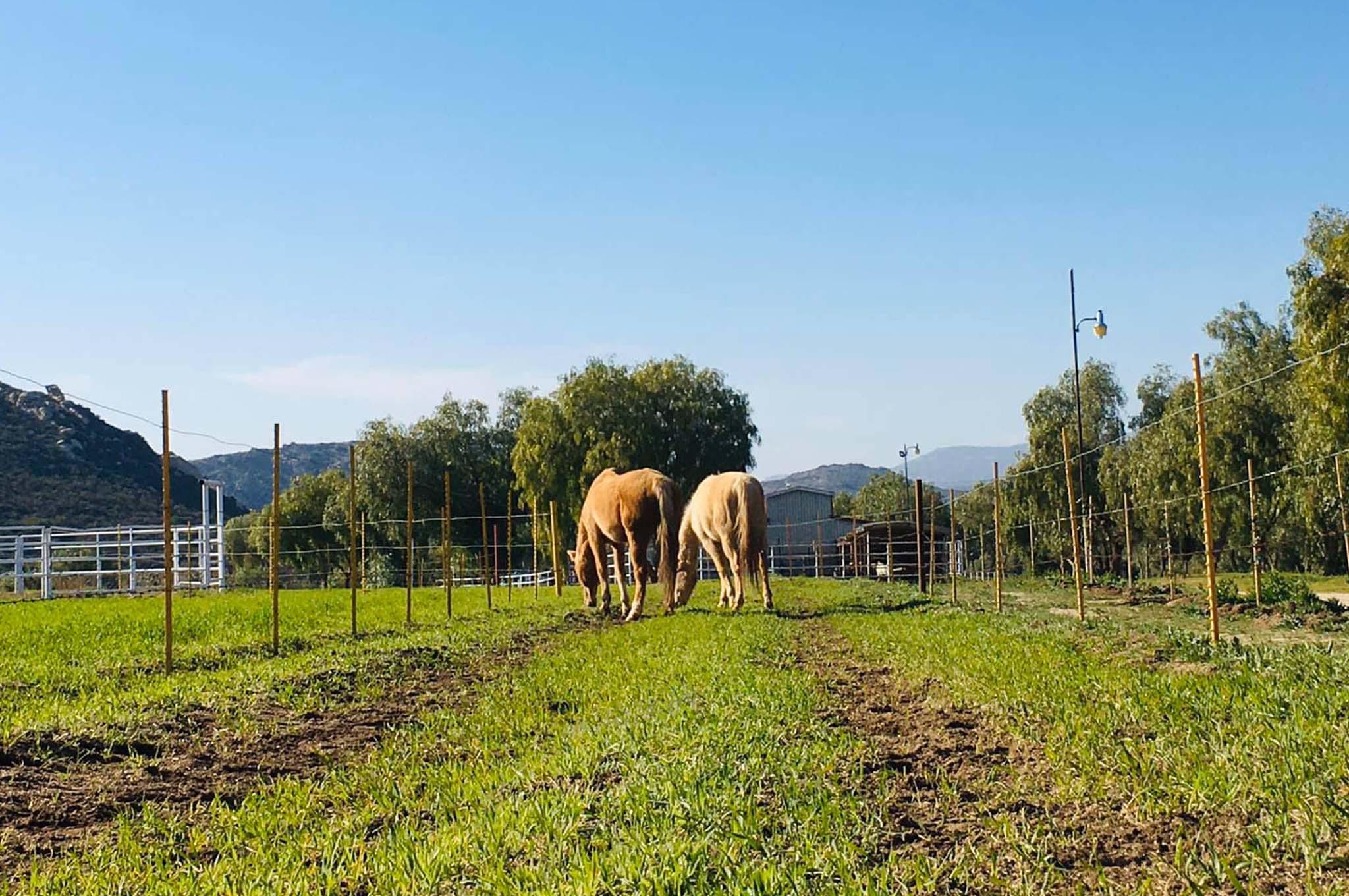 Rancho Ojai, Tecate
